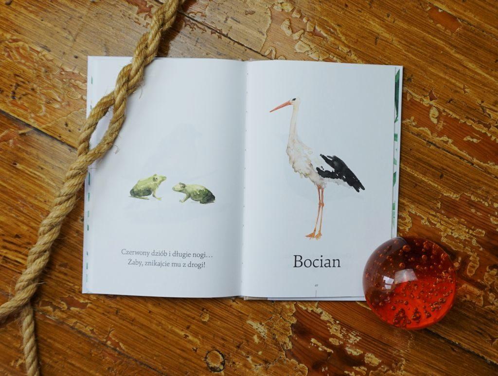 Co Za Ptak Robi Tak Książka Z Płytą Cd Strefa Psotnika