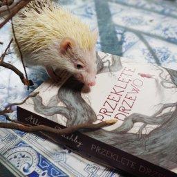 Przeklęte drzewo - powieść dla dzieci 9+ o przeprowadzce, depresji i jeżach