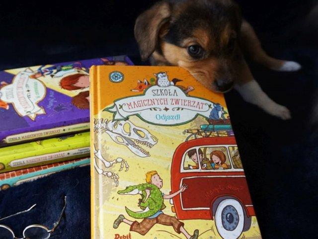 Szkoła magicznych zwierząt. Odjazd! - 4 tom serii już w księgarniach